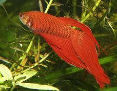 Non-cichlid fishes