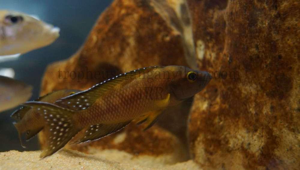 рыбы 065.JPG
