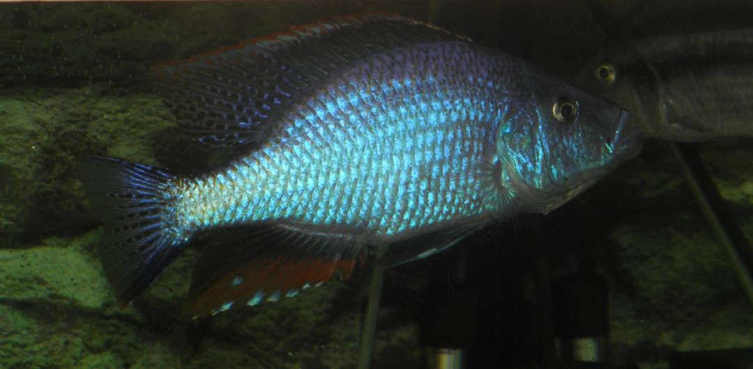 Мои рыбсы