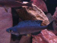 рыб 039.JPG
