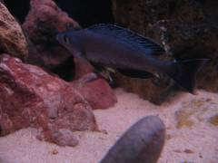 рыб 028.JPG
