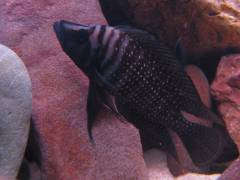 рыб 045.JPG