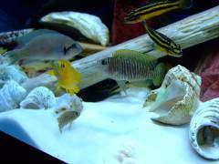 рыбы 212