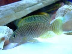 рыбы 499