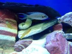 рыбы 448