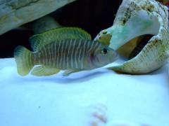 рыбы 570