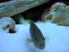рыбы 502