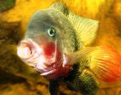 Обитатели нашего аквариума