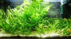 Растения, Мбуна и новый AQUArium