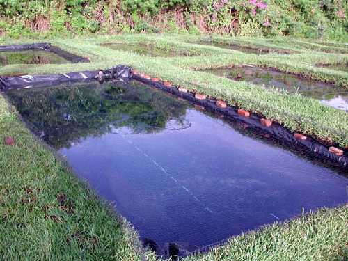 Авторский курс.объем рассчитывается из предполагаемого количества особей, заселяемых в пруд.