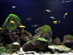 biotope aquarium A 18 4