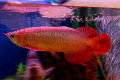 Мои аквариумные рыбки.