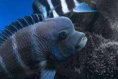 blue Mpimbwe