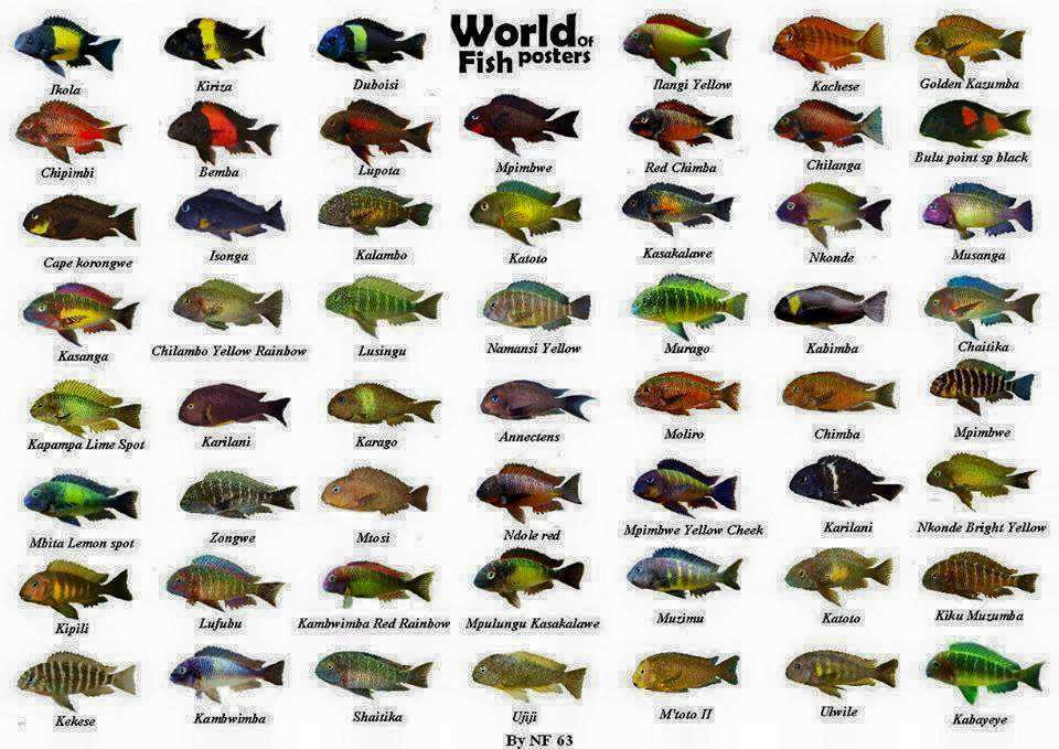 Аквариумные рыбки названия виды фото описание