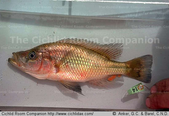 picture_species_show.jpg