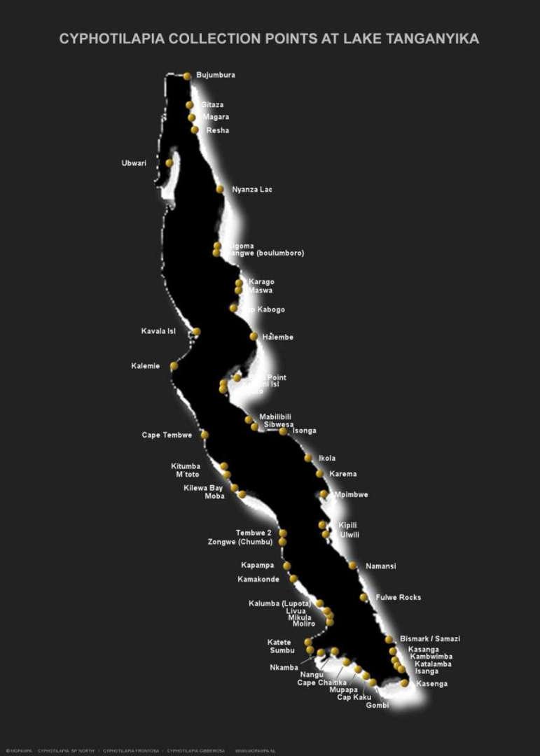 cyphotilapia карта