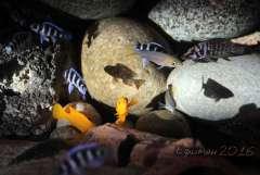 Фрагмент аквариума.