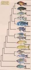 Taxonomy таксономия