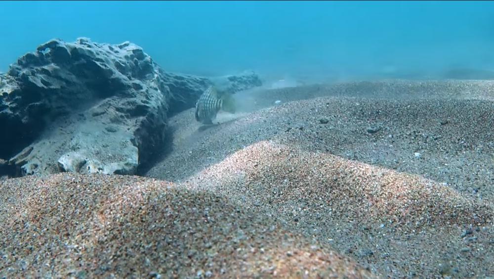 Пески Танганьики.png