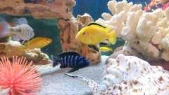 Мой первый аквариум, 200 л.