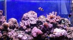 Мой первый морской аквариум 1999г