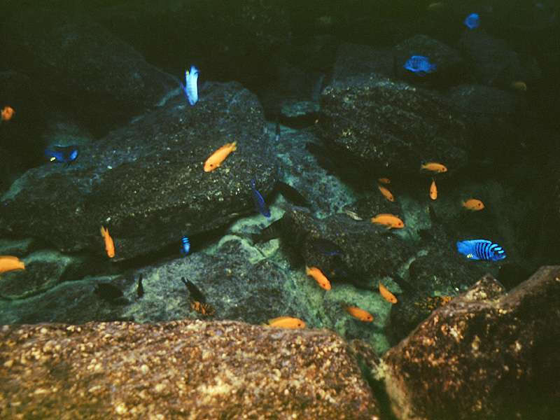 minos reef