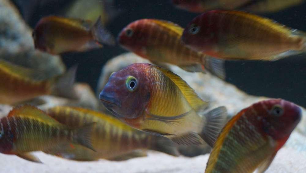 рыбы_510.JPG