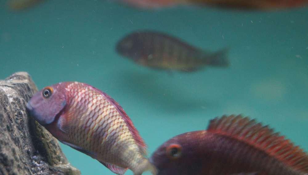 рыбы_498.JPG