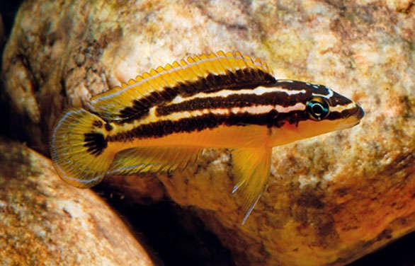 Mystery-Fish-AMAZ-5-1.jpg