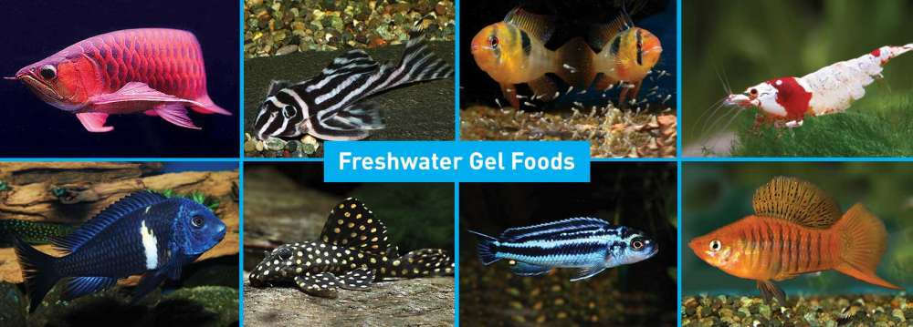Fish-Products-banner-3.jpg
