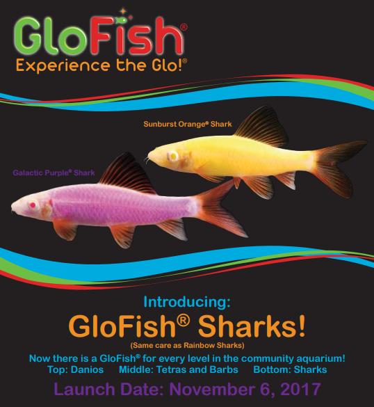 glofish-sharks.png