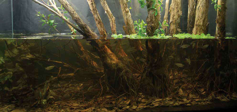 AGA-Winning-Aquascapes-2018-Submerged-Melaleuca-Forest.jpg