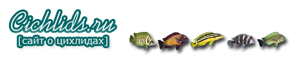 Форум Cichlids.RU