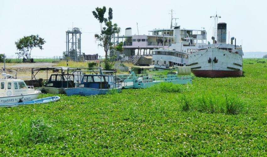 water_hyacinth_kisumu_docks_richard_portsmouth_cc_by-nd_2.0.jpg